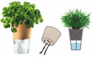 Все, что нужно знать о фитильном поливе комнатных растений