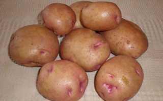 Картофель 'Бородянский розовый' — описание сорта, характеристики
