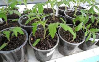 Почему не всходит рассада помидоров: причины, как ускорить всхожесть
