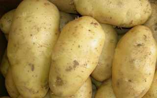 Картофель 'Весна' — описание сорта, характеристики