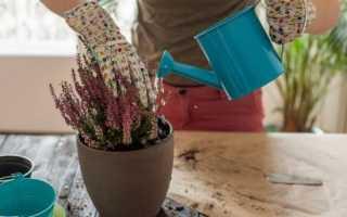 Удобрения и подкормка цветочных культур, комнатных растений