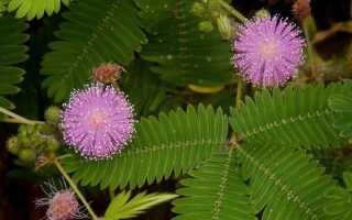 Топ-8 самых популярных растений на черном рынке