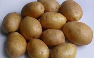 Картофель 'Диамант' — описание сорта, характеристики