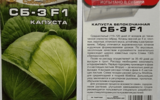 Капуста белокочанная 'СБ-3 F1' — описание сорта, характеристики