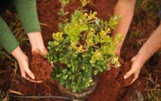 Посадка деревьев и кустарников: технология, правила и сроки