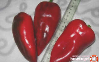 Перец сладкий 'Болгарец' — описание сорта, характеристики