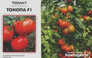 Томат 'Ультимо F1' — описание сорта, характеристики