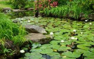 Самые интересные растения для домашнего водоема