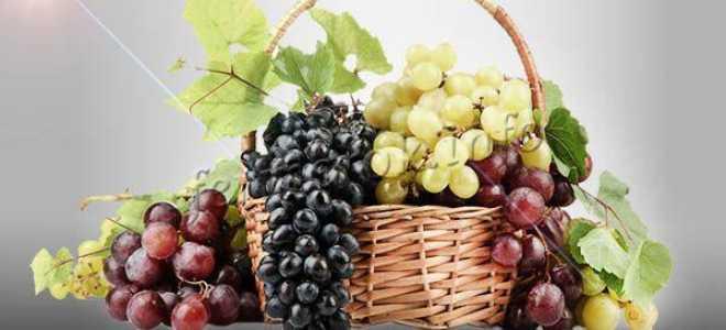 Виноград культурный 'Восторг' — описание сорта, характеристики