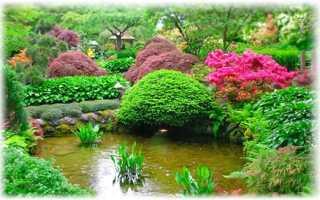 Названия декоративных форм растений