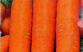Морковь посевная 'Кардаме F1' — описание сорта, характеристики