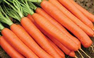 Морковь посевная 'Нантская Семко F1' — описание сорта, характеристики