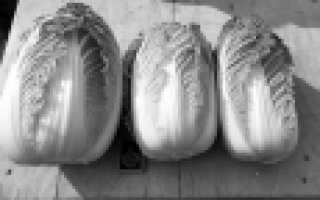 Капуста пекинская 'Хибинская' — описание сорта, характеристики