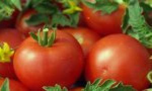 Картофель 'Краснопольский' — описание сорта, характеристики