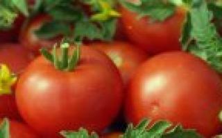 Картофель 'Гатчинский' — описание сорта, характеристики