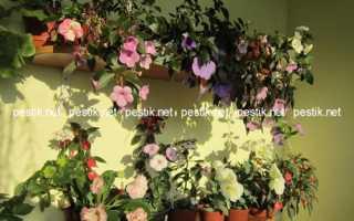 Почему растения не цветут