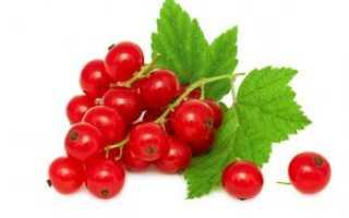 Смородина красная 'Натали' — описание сорта, характеристики