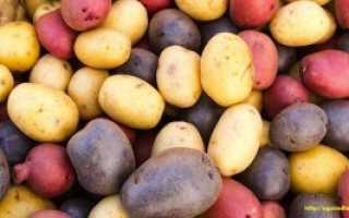 Картофель 'Пионер' — описание сорта, характеристики
