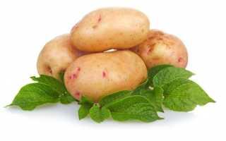 Картофель 'Приор' — описание сорта, характеристики