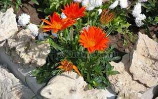 Растения для альпинария: выбираем горную флору для обустройства альпийской горки