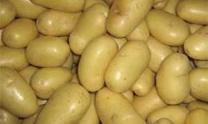 Картофель 'Эстима' — описание сорта, характеристики