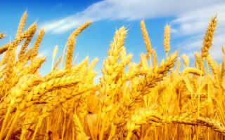 Фосфорные удобрения, часть 1: функция фосфора у растений, определяем дефицит