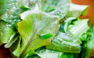 Горчица салатная 'Муравушка' — описание сорта, характеристики