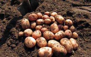 Как хранить картошку в квартире, на балконе, в погребе зимой
