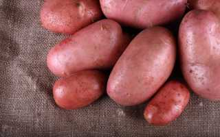 Картофель 'Дезире' — описание сорта, характеристики