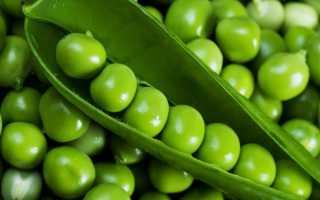Горох овощной 'Адагумский' — описание сорта, характеристики