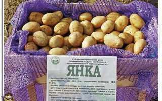 Картофель 'Румянка' — описание сорта, характеристики