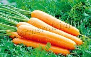 Морковь посевная 'Королева осени' — описание сорта, характеристики