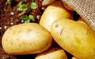 Картофель 'Корона' — описание сорта, характеристики