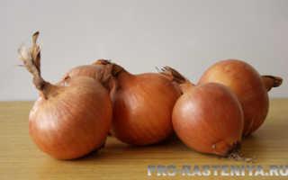 Лук репчатый (Allium cepa) — описание, выращивание, фото