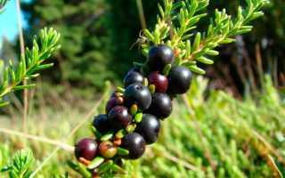 Что такое водянка растений