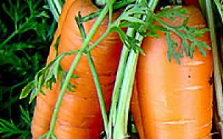 Самые популярные сорта моркови для Подмосковья, Урала и Сибири