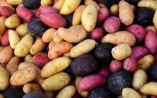 Картофель 'Фреско' — описание сорта, характеристики