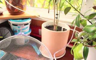 Автополив комнатных растений: какую систему лучше выбрать