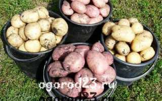 Картофель 'Фрегата' — описание сорта, характеристики