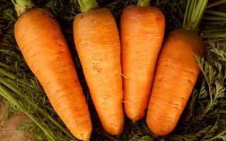 Морковь посевная 'Шантенэ 2461' — описание сорта, характеристики