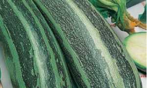 Кабачок 'Стриато ди Италия' — описание сорта, характеристики