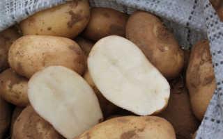 Картофель 'Удача' — описание сорта, характеристики