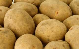 Картофель 'Ярла' — описание сорта, характеристики
