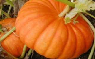 Тыква крупноплодная 'Улыбка' — описание сорта, характеристики