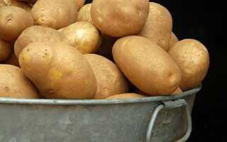 Картофель 'Елизавета' — описание сорта, характеристики