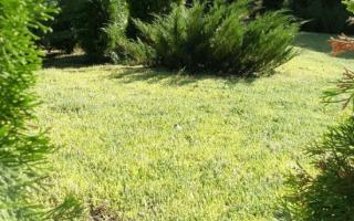 Чем заменить газон на участке