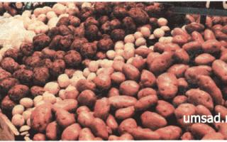 Картофель 'Заворовский' — описание сорта, характеристики