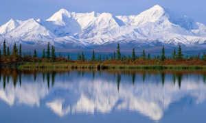 Малина обыкновенная 'Дар Сибири' — описание сорта, характеристики