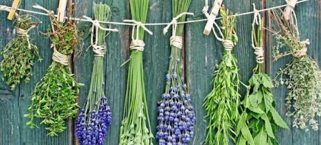 Топ-15 растений для дыхательной системы человека